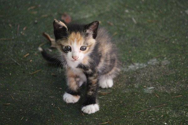 cute kitten sitting on the floor outdoor